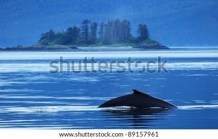 Whale is at Alaska. - stock photo