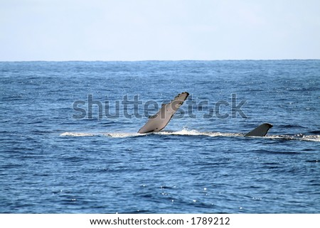 Whale lying on the side - stock photo