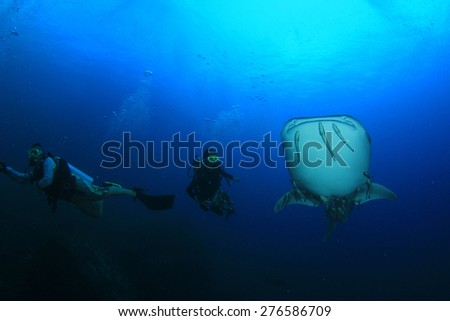 Whale Shark and scuba divers - stock photo
