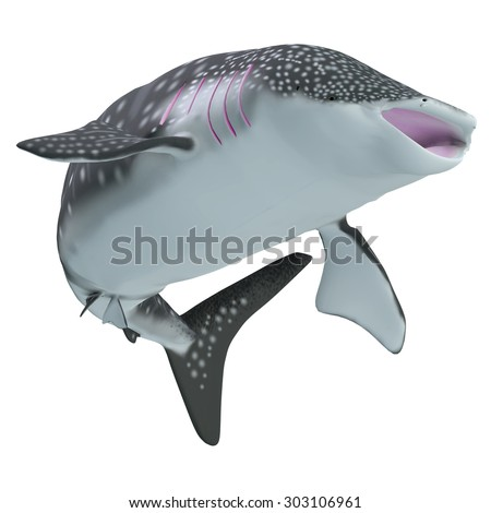 Whale Shark Body - The Whale shark is a slow-moving filter feeder and is found in tropical ocean waters. - stock photo