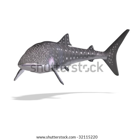 whale shark. 3D render with clipping path and shadow over white - stock photo