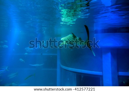 Whale shark in the aquarim - stock photo