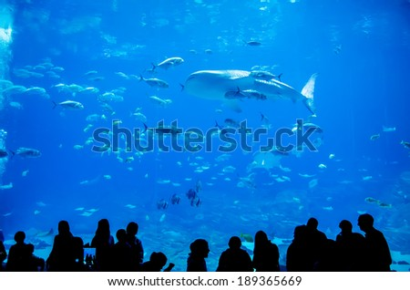 whale sharks swimming in aquarium with people observing - stock photo