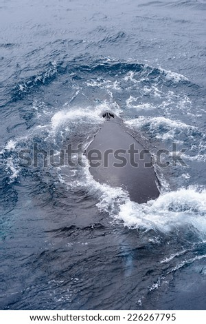 Whale siwms on the surface in Antlantic Ocean near Antarctica - stock photo