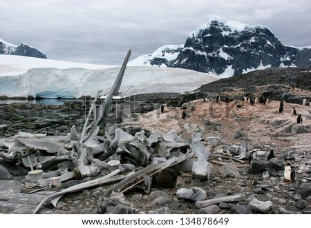 whale skeleton and penguins in Antarctica - stock photo