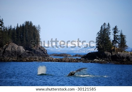 Whale swimming in ocean near Valdez, Alaska - stock photo