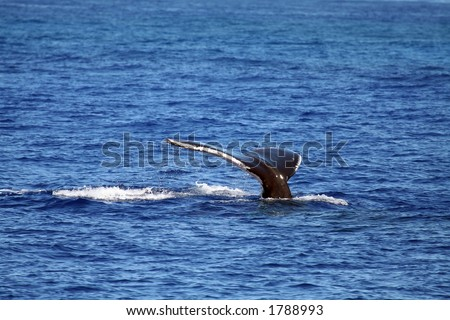 whale tail diving, from surface