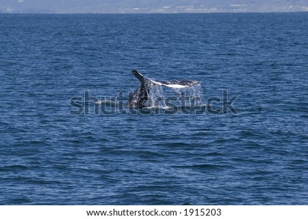 Whale Tail With Water