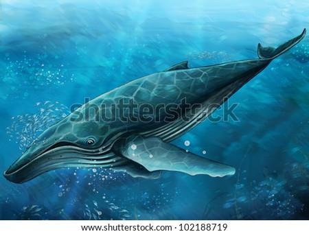 whale undersea - stock photo