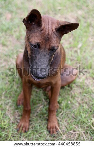 What's look a dog - stock photo