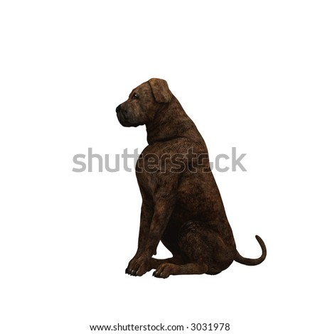 What the Lion is to the Cat the Mastiff is to the Dog, the noblest of the family. His courage does not exceed his temper , generosity and kindest of his race.