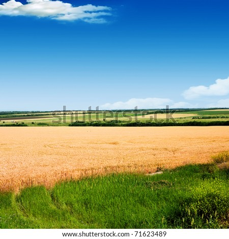 Wheat against the blue sky - stock photo