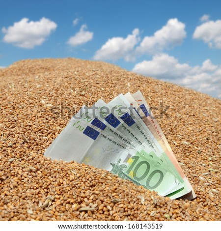 Wheat and Euro banknote concept, closeup with blue sky in background - stock photo