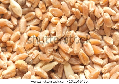 wheat as background. macro