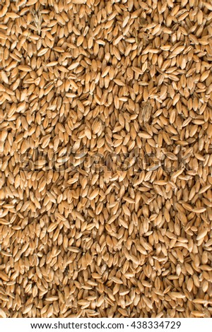 Wheat background.