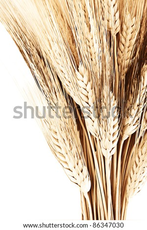 Wheat bouquet border, isolated on white background, closeup on autumn ripe plant, harvest concept - stock photo