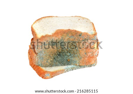wheat bread slices with mold isolated on white background - stock photo