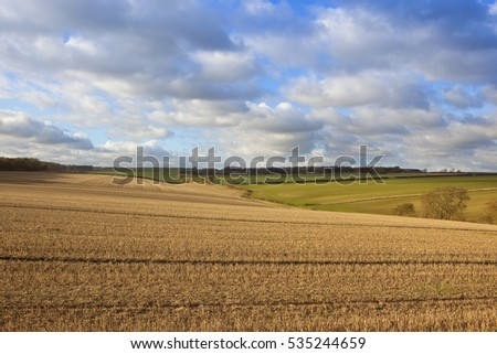 wheat crops and straw stubble fields in a yorkshire wolds landscape with woods and hedgerows under a blue sky with fluffy clouds in autumn