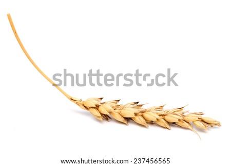 wheat ear isolated on white background - stock photo
