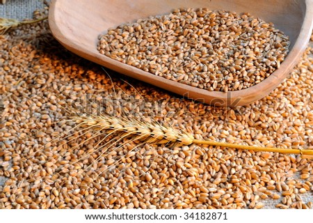 wheat ears and seeds