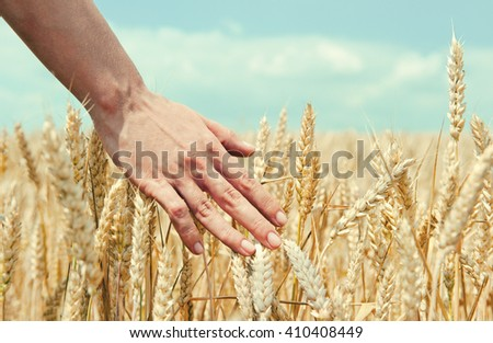 Wheat ears in the hand. Harvest concept. Vintage photo - stock photo