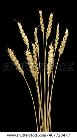 Wheat ears isolated on a black background - stock photo
