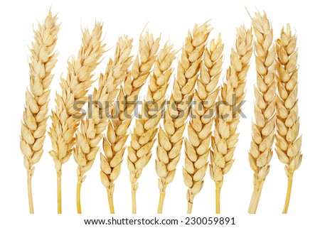 wheat ears isolated on white - stock photo