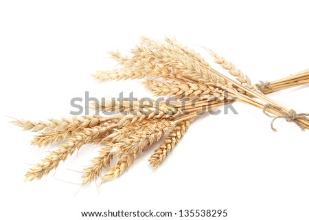 Wheat ears isolated on white background. - stock photo