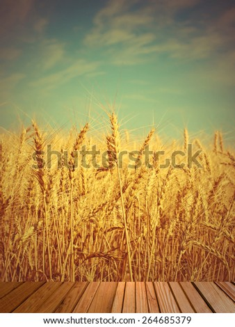 Wheat ears on field and wooden timber on the foreground.Toned image. - stock photo
