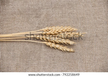 Wheat ears on grunge background