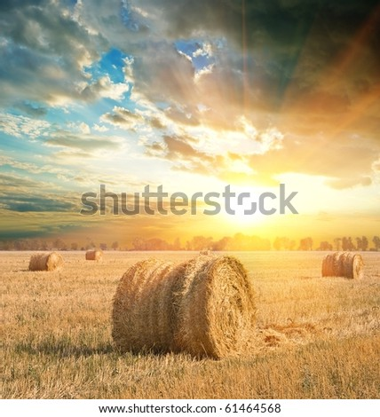 wheat field after a harvest at the evening - stock photo
