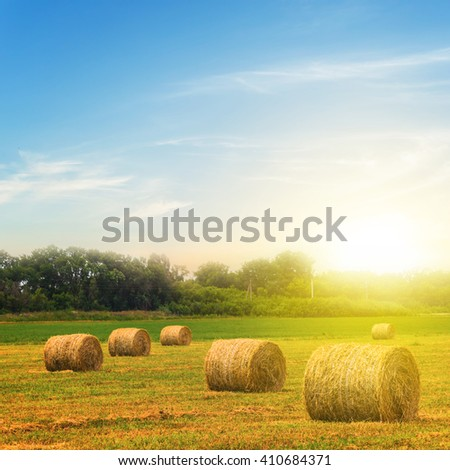 wheat field after a harvest at the sunset - stock photo