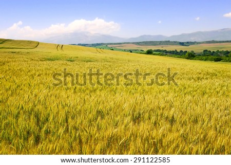 Wheat field against a blue sky and mountains - stock photo