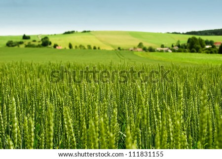 Wheat field and countryside scenery - stock photo