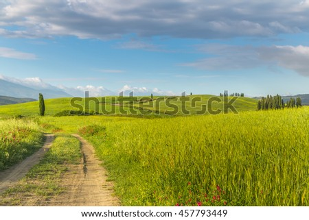 Wheat field and countryside scenery. Tuscany. Italy