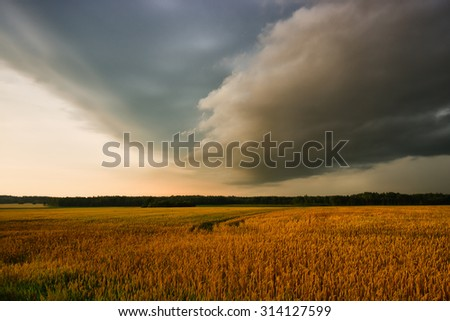 wheat field and dark storm clouds