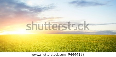 Wheat field at sunrise - stock photo