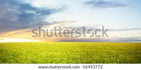 Wheat field at sunset - stock photo
