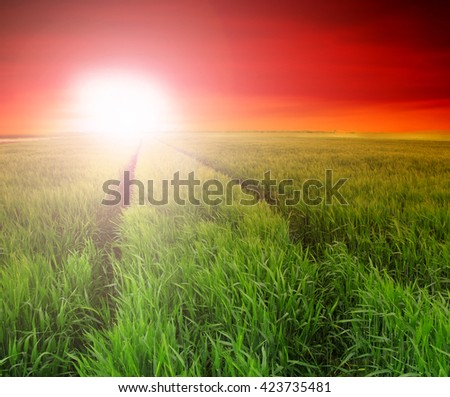 wheat field at the sunset - stock photo