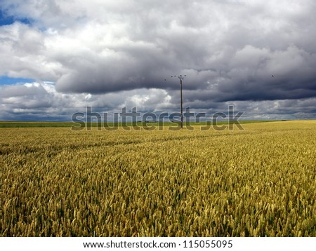Wheat field before a storm in France