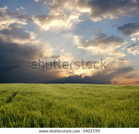 Wheat field during stormy day - stock photo