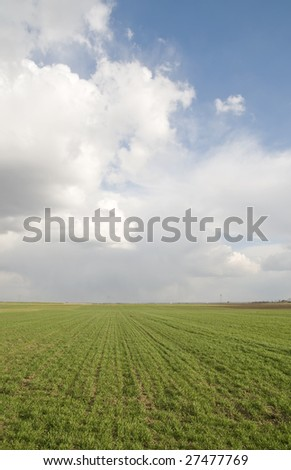 Wheat field in early spring with dramatic sky - stock photo