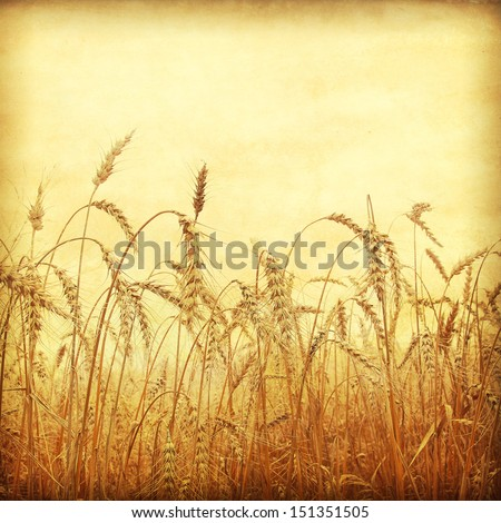 Wheat field in grunge and retro style.