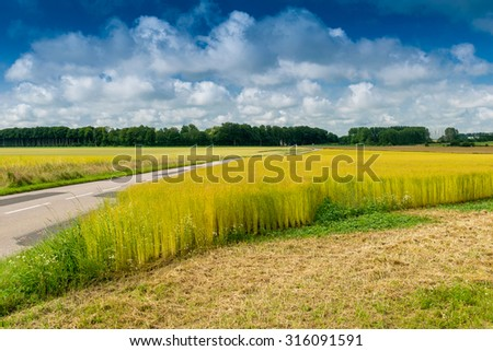 Wheat field in Normandy, France. - stock photo