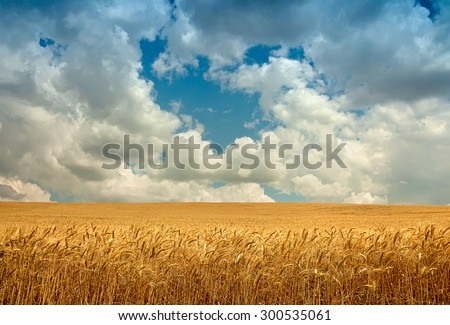 Wheat field landscape with sky