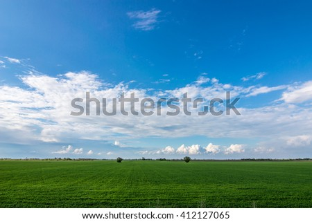 wheat field on a background of clouds in spring