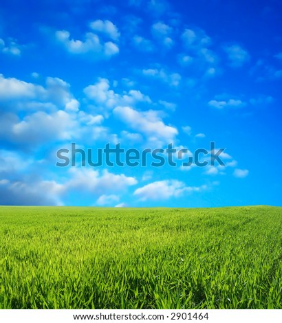Wheat field over beautiful blue sky 2 - stock photo