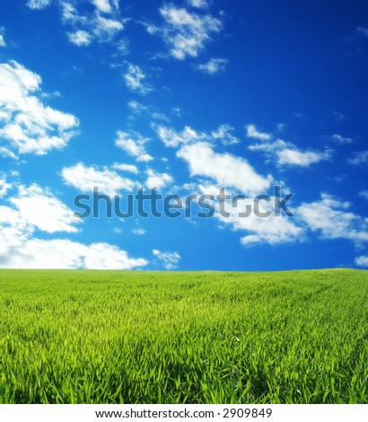 Wheat field over beautiful blue sky 5 - stock photo