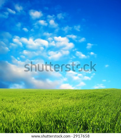Wheat field over beautiful blue sky 4 - stock photo