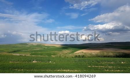 Wheat Field Panaroma - stock photo